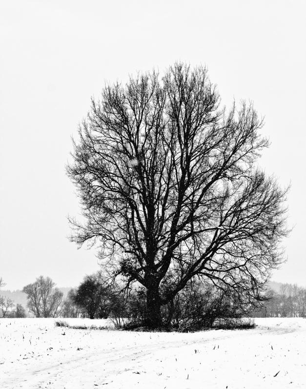 Schnee-0949